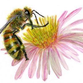 abeille Bernier