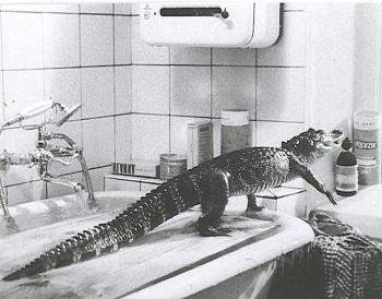 Katia et les Crocodiles