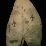 Binh Danh photographies sur feuilles