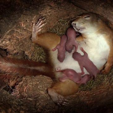 Vie d'un écureuil