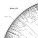 l'abre de la vie phylogénétique