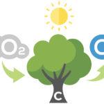 Arbres pièges à CO2