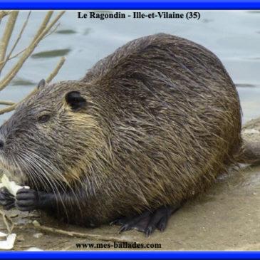 espèces protégées en Bretagne